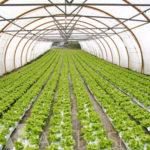 El Crowdlending es una nueva forma de financiación para el sector agroalimentario